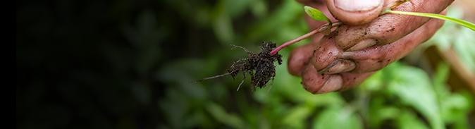 Weeds image
