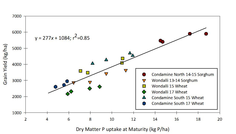 Figure 1. Maturity dry matter P uptake (kg P/ha) vs grain yield (kg/ha) in cereal crops grown at Western Downs deep-P sites