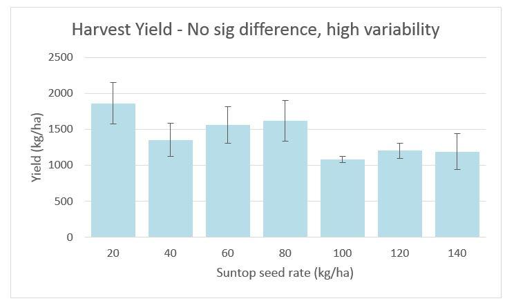 Figure 2. Effect of seeding rate on grain yield in Suntop wheat, Griffith 2017.