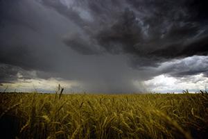 image of rain and grain