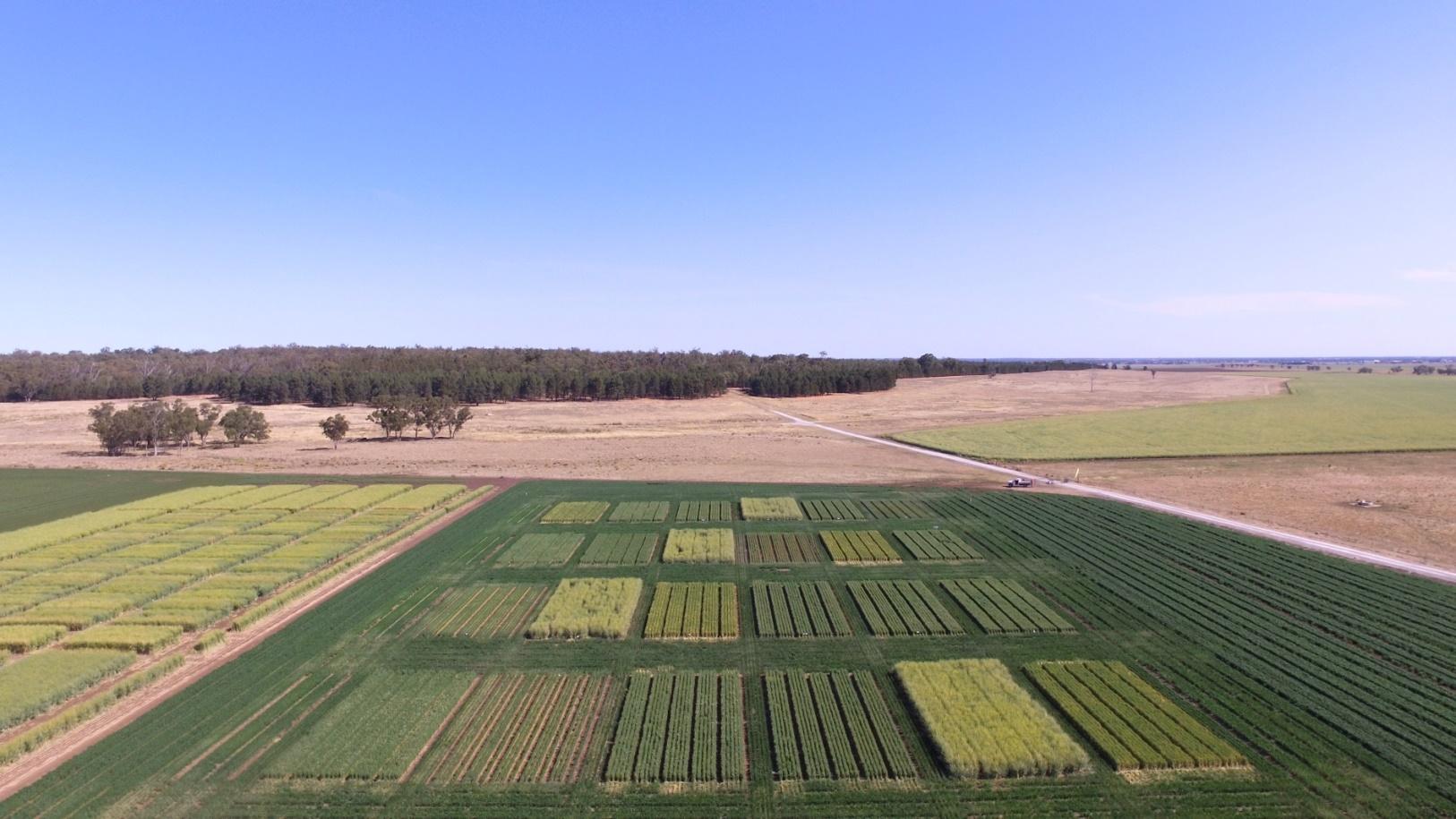Photo shows Narrabri farming systems site – 20 September 2017
