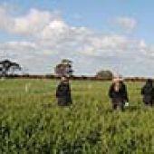 Harvest loss goals as grain percentage