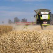 Maximising canola performance at harvest