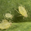 Exploring novel technologies to take pest management to the next level