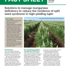 Managing manganese deficiency in lupins
