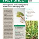 Russian wheat aphid fact sheet