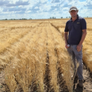 Durum breeding to grow in commercial sector