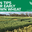 Ten tips for early sown wheat