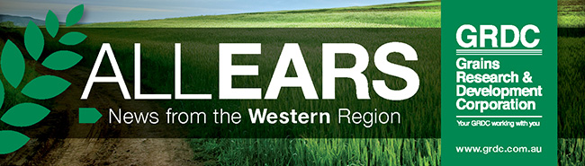 All Ears Western logo