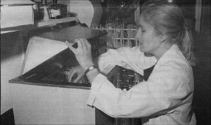 Ms Ann Pudney measures protease enzymes in samples of germinated wheat.