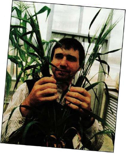 Dr Phil Davies — barley lines from pollen grains for about one-tenth the cost of the existing doubled haploid technology