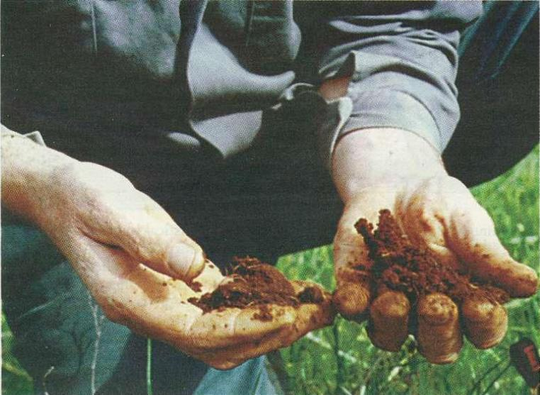 Photo of a farmer holding clumps of alkaline soil