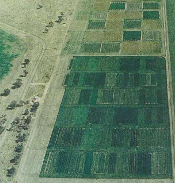 Aerial view of the Nindigully trial site showing (from the top down) the pulse (grain legume) trials area, the pasture-crop area (wheat is dark green, pastures lighter), the cropping area with 1997 winter crops, and the fallow area