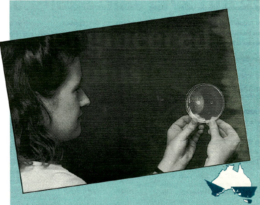 Helen Cole observes the inhibition of a test fungus by a strain of the take-all fungus on an agar plate.