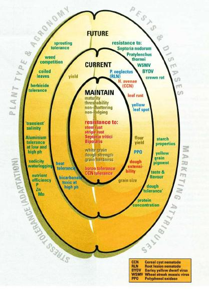 Diagram demonstrating the relationships between: present and future concerns; pests and diseases; marketing attributes; stress tolerance (adaptation); and Plant type & agronomy.