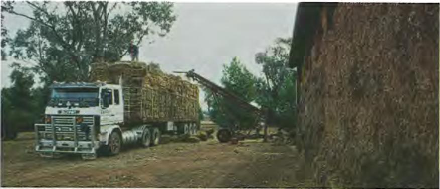 Truck carrying crop