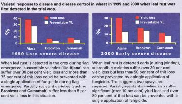 Varietal response to disease and disease control in wheat in 1999 and 2000 when leaf rust was first detected in the trial crop.