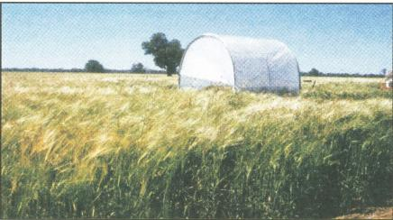 A 'rain-out' shelter to allow measurement of a dry soil profile in a mature wheat crop.