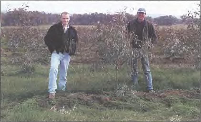 Catchment Manager (DLWC) Paul Hutchins (L) and grower Ian Kemmis (N) inspect 12-month-old Saltgrow hybrid gums at 'Woomahringollg' ill the Kyeamba Valley, Ilear Wagga Wagga ill south-eastern NSW.