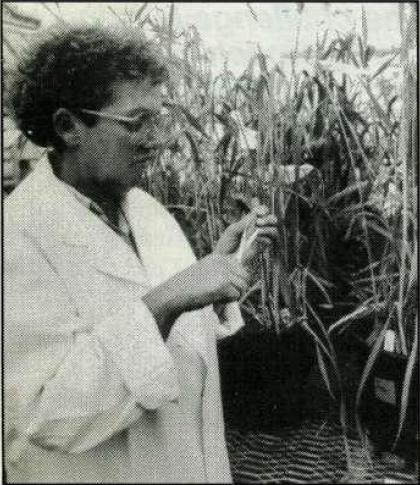 Bronwyn Clark: Triticale breeding at the University of New England.