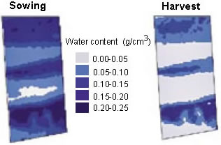 Figure 1. Soil water content (0.4 to 1.6 m) determined from calibrated EM38 (vertical mode) measured at sowing and harvest at Loxton during 2003. Note the signifi cantly drier profile at harvest (lighter shade).