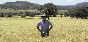 John Traill at his Liverpool Plains property.
