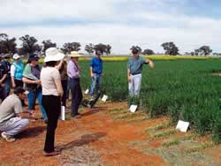 Photo of Dr Andrew Verrel (NSW DPI) guides advisers through a replicated precision row plafcement experiment at Tamworth