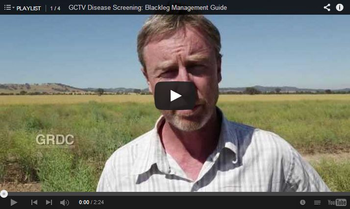 Still of the GCTV Disease Screening: Blackleg Management Guide video