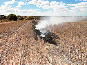 Burning windrow in a large field.