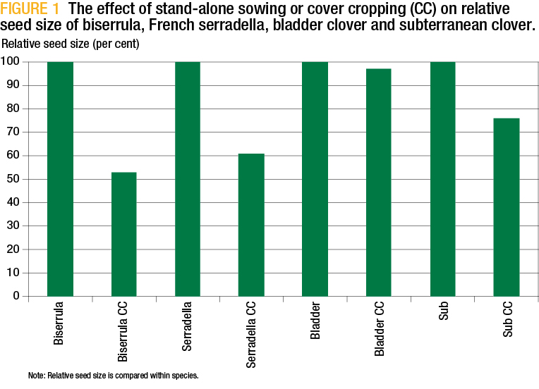Figure 1: The effect of stand-alone sowing or cover cropping (CC) on relative seed size of biserrula, French serradella, bladder closer and subterranean clover.
