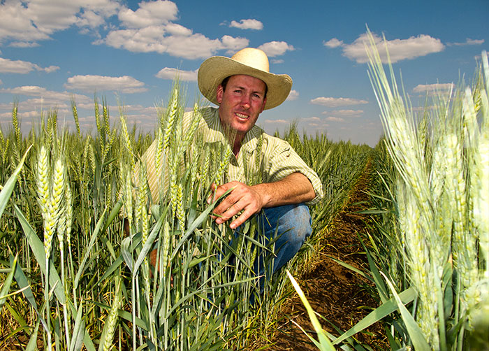 Man kneeling in grain crop