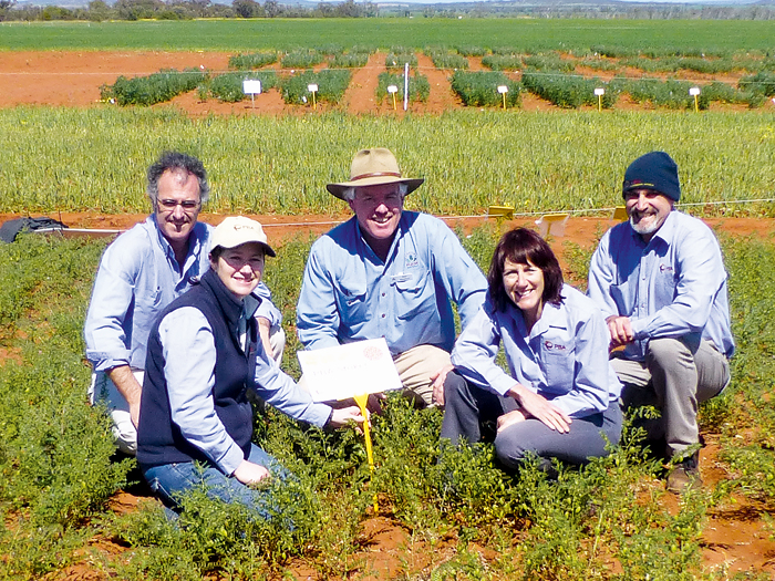 Image of five people kneeling in a young chickpea crop