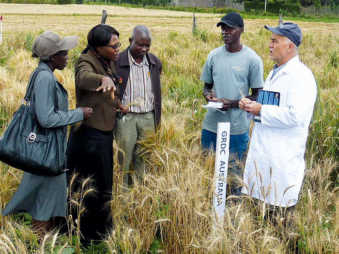 Five people discussing a crop in a research field