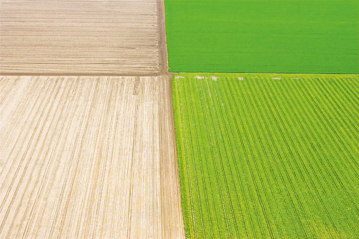 Side-by-side paddocks that are contrasting wheat and green colours