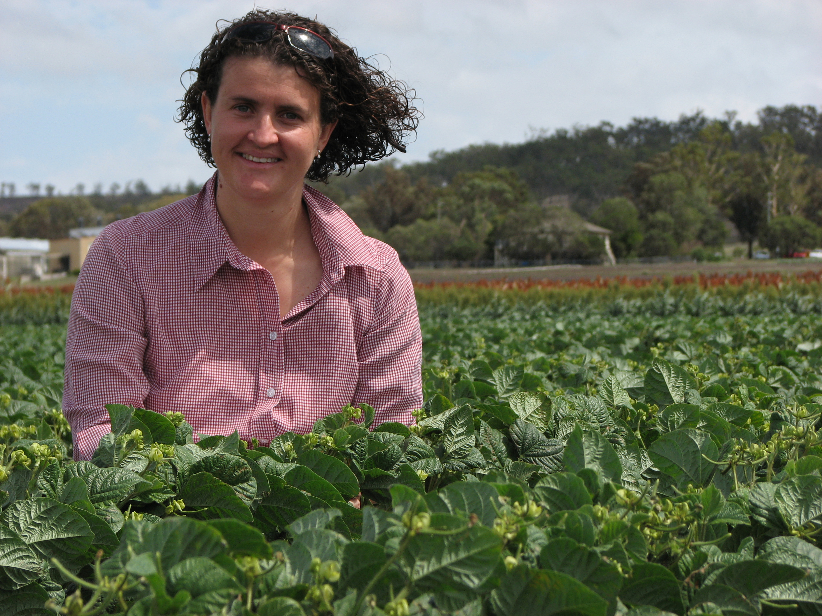 Photo of a woman standing in a mungbean crop