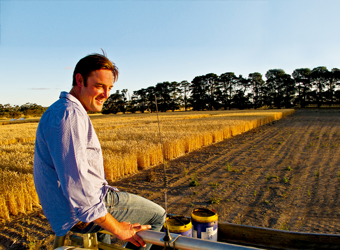 Man sitting on end of truck, among wheat fields