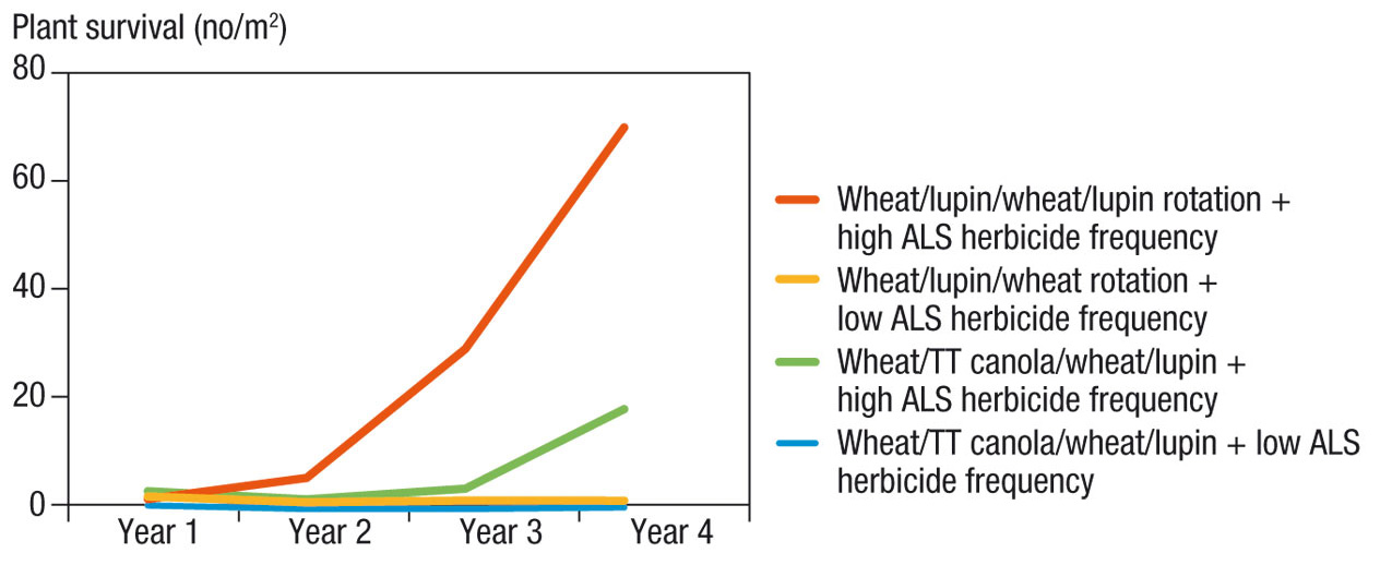 Image of a graph showing the impact of crop rotation and herbicide on wild radish application in WA
