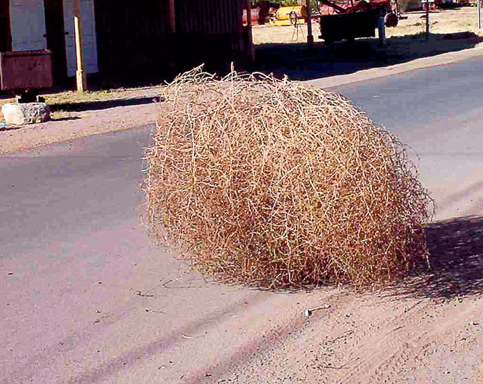 A photo of tumbleweed