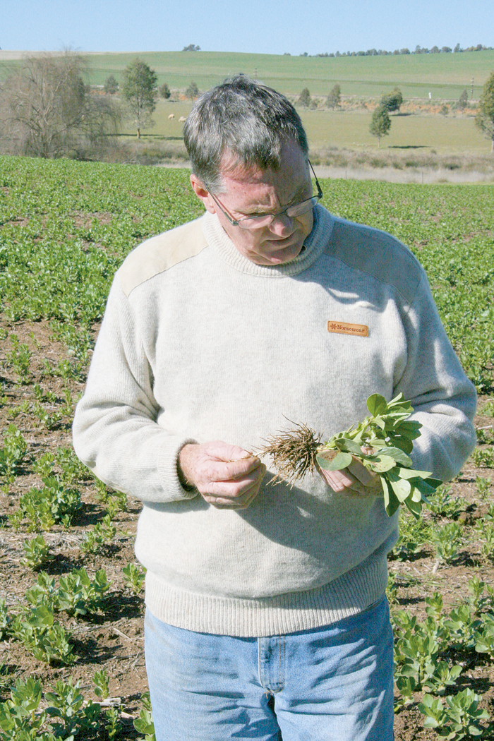 Photo of a man inspecing a plant