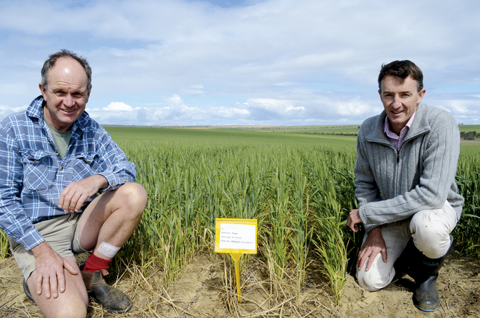 Photo of Mingenew farmer Peter Horwood (left) and Peter Newman