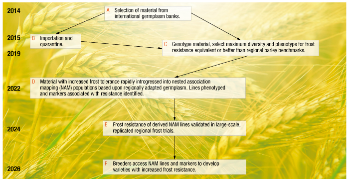 Predicted timeline for new frost-tolerance genetics to enter wheat and barley breeding programs