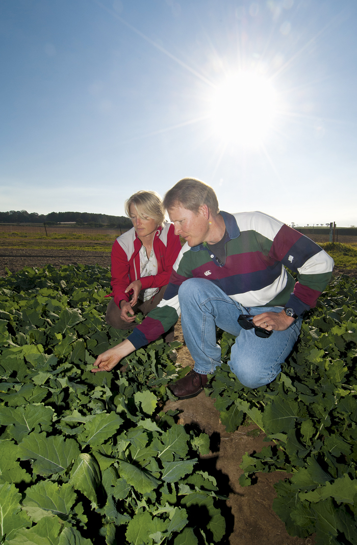 Photo of man and woman in field of canola