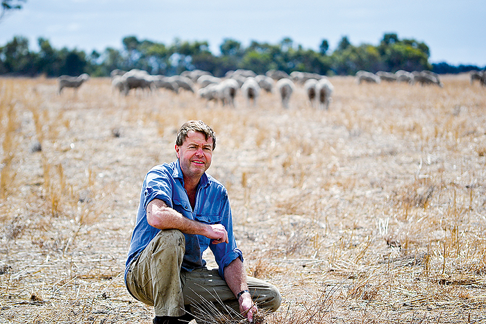 A man in a paddock with sheep