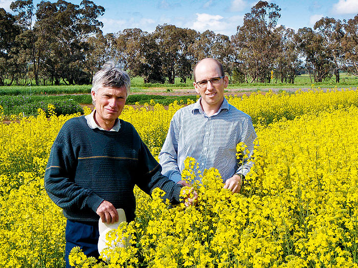 Two men standing among a crop