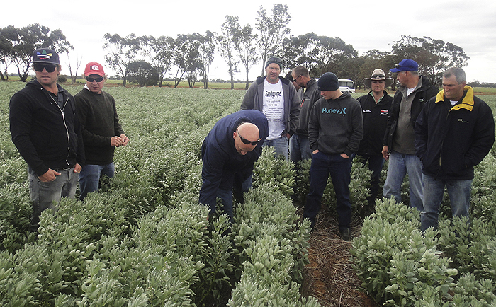 Photo of group inspecting a crop
