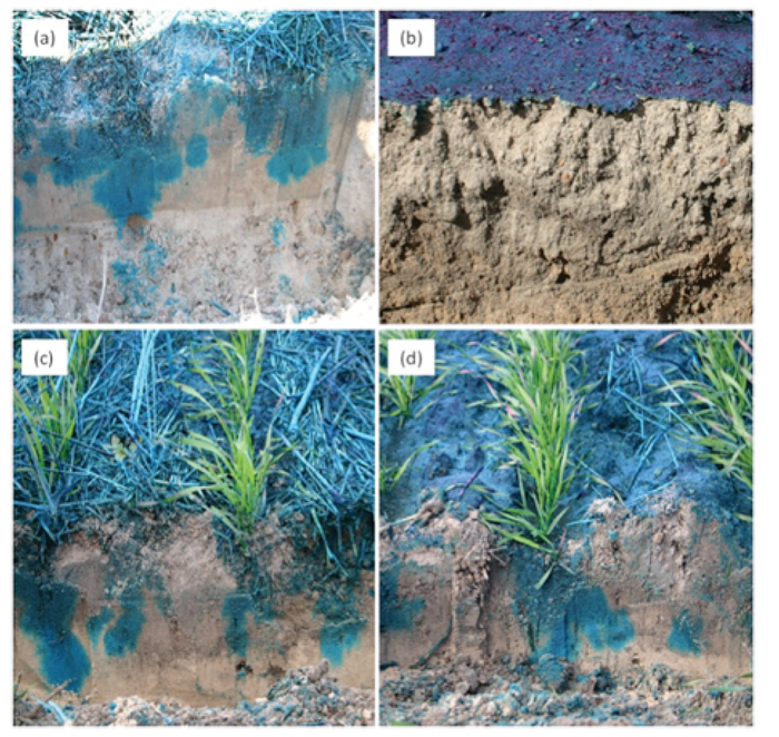 Photo compilation (4) showing variation in soil water movement between cultivated and no-till non-wetting soil