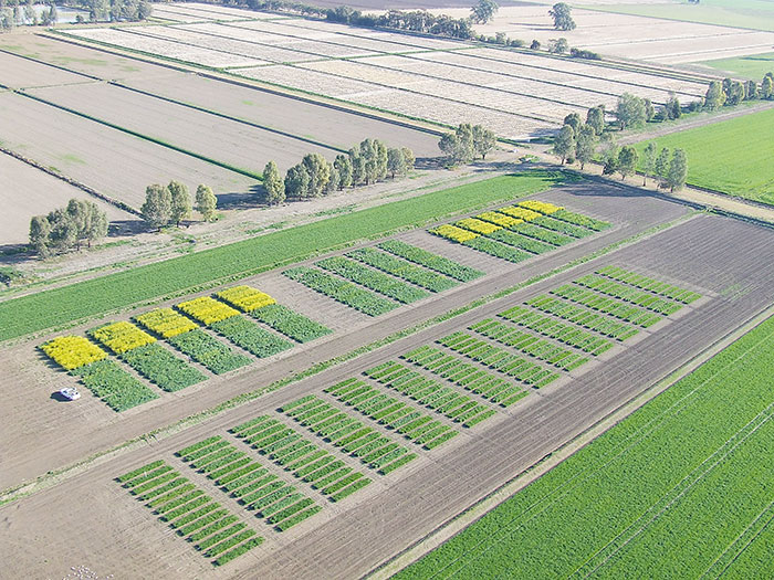 Variety sets irrigated wheat yield