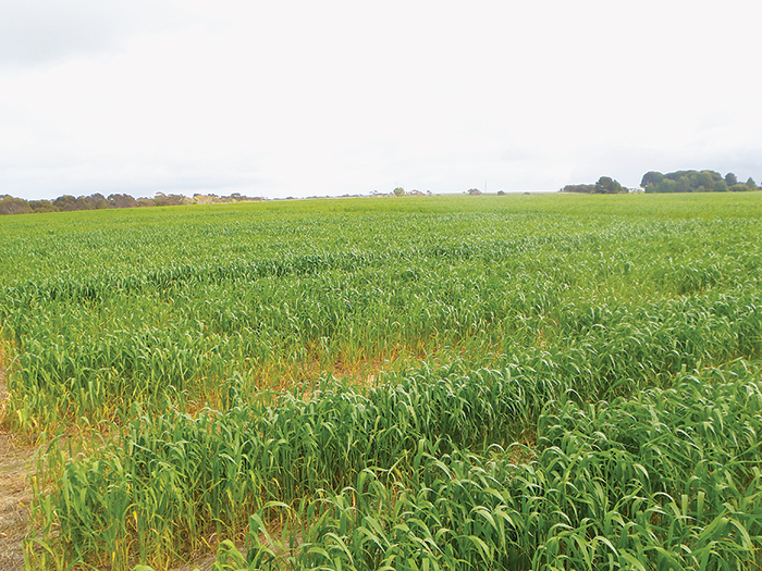 A SARDI trial concerning the effects of soil amelioration on crop performance at Brimpton Lake, South Australia