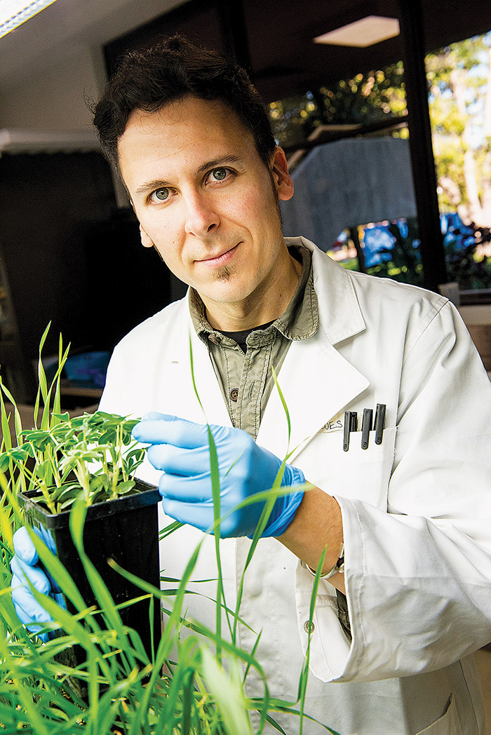 Man lightly grasping leafs of a plant in a laboratory