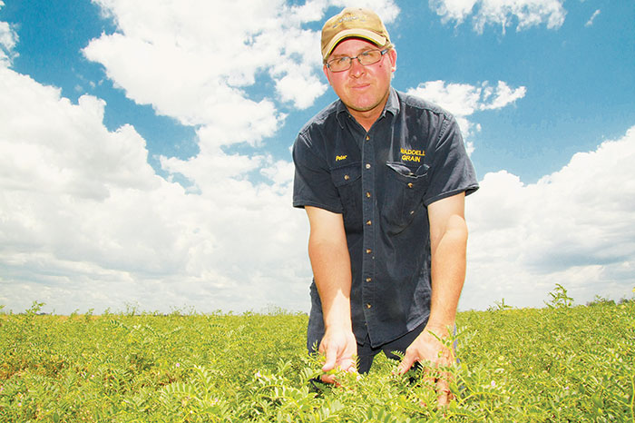 Photo of Queensland grower Peter Waddell